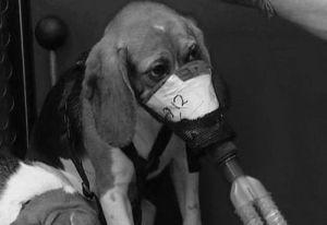 Quais empresas testam em animais?