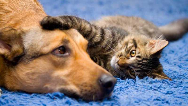 Orientações básicas para encaminhar a adoção de cães e gatos