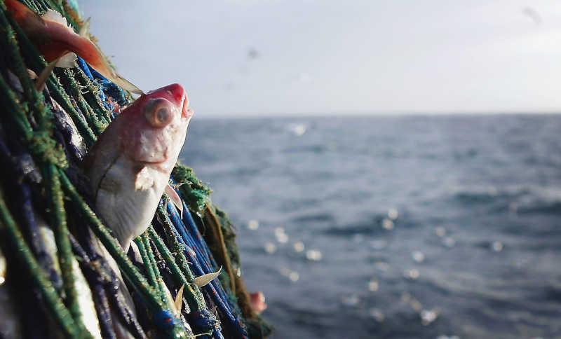 Os peixes: uma sensibilidade fora do alcance do pescador