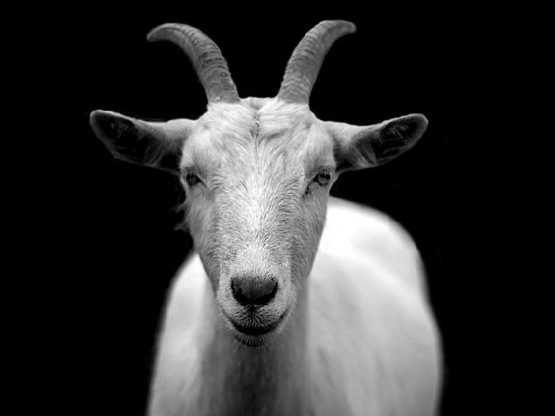 luciano cabra