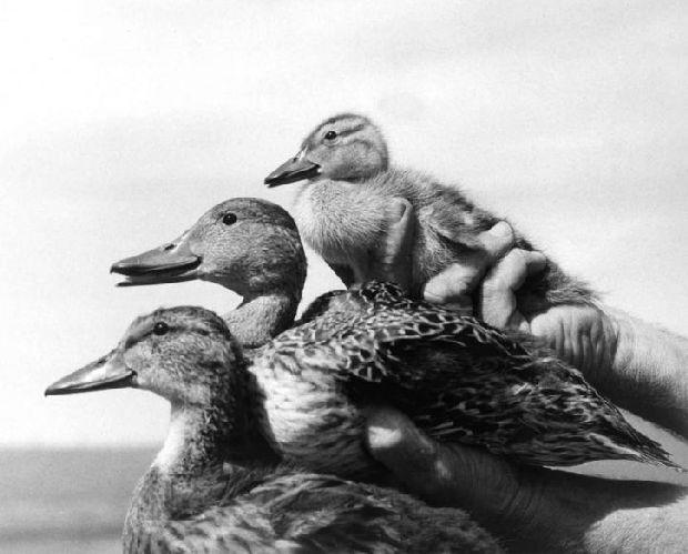 luciano pato-familia