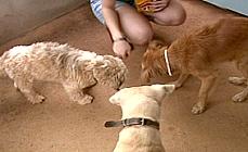Câmara pode votar na semana que vem política de esterilização de cães e gatos