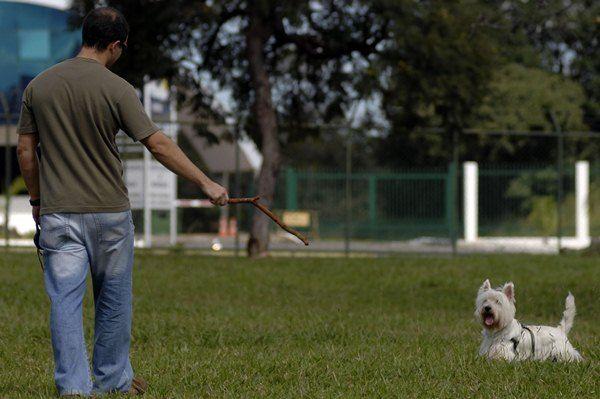 DF: Distritais aprovam regra que restringe presença de animais em parques