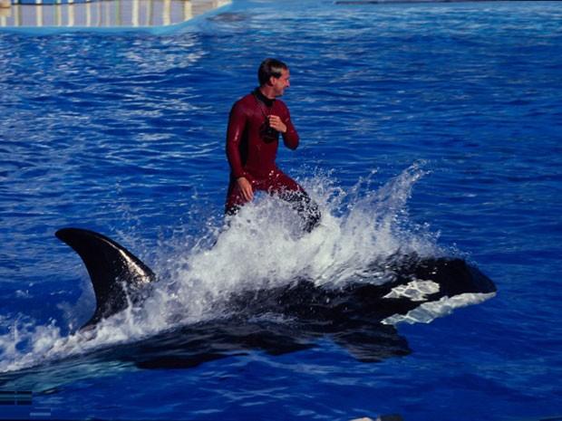 Projeto de lei quer proibir orcas em parques temáticos da Califórnia