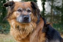 França: lei deve tratar os animais como 'seres sencientes', não 'propriedade pessoal'