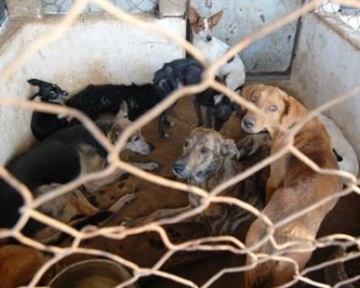Coordenador do CCZ admite exterminar cães saudáveis em Três Lagoas, MS