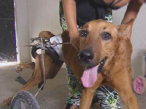 No Recife, estudante adota animais com deficiência e eles voltam a andar