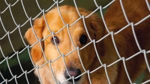 Petição quer criminalizar abate de animais saudáveis em Portugal