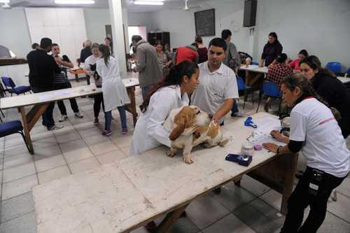Cães são atendidos gratuitamente em Curitiba, PR