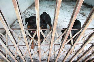 MP quer regulamentação da lei que proíbe aluguel de cães de guarda no RS