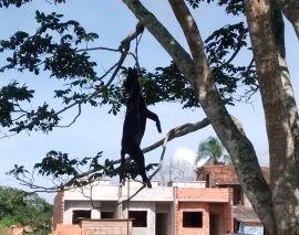 Cachorro foi amarrado em árvore e morto a pauladas em Araquari, SC
