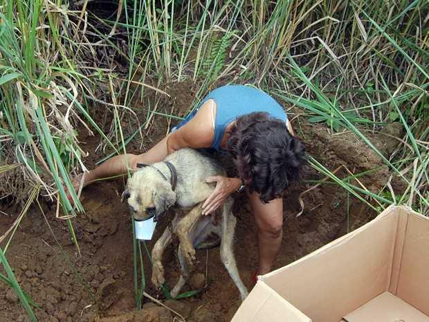 Cachorro é resgatado após ser enterrado vivo pelo próprio tutor