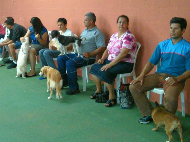 Mutirão de castração de cadelas é promovido em Itapetininga, SP