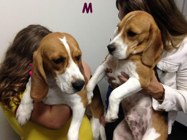 'Antes era um experimento, agora é um cão', diz tutora de beagle do Royal