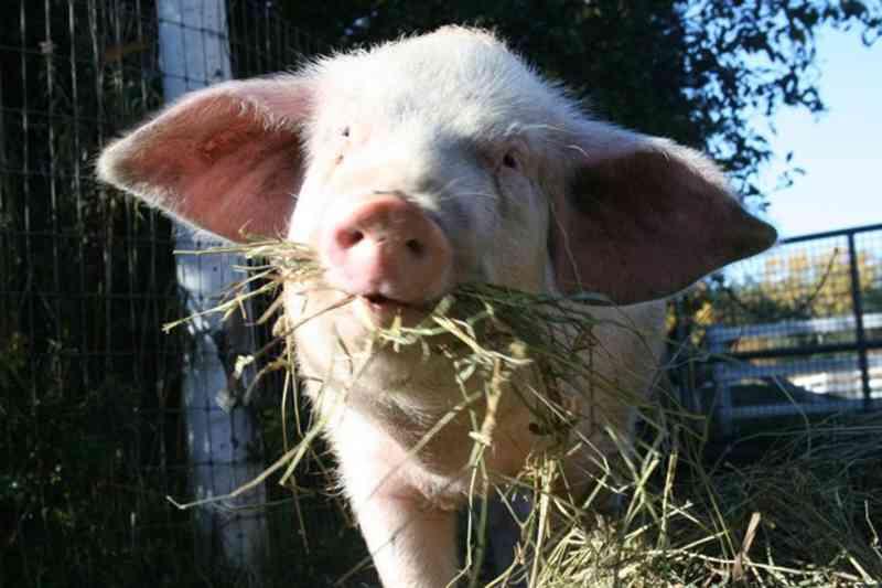 Sustentabilidade para santuários de animais