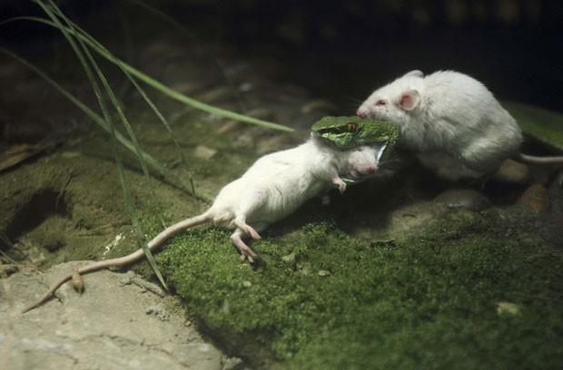 juliano ratos-olidario-ajuda-amigo