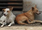BA salvador pondi smiley street dogs thumb