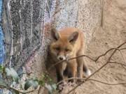 Animais selvagens invadem região central de Berlim