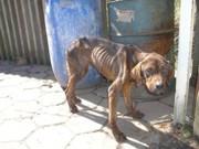 Acusados de maus-tratos contra animais domésticos continuam impunes
