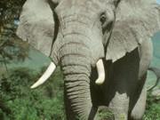 Angola na reunião sobre fauna selvagem e tráfico de madeira, em Botswana