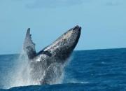 Pesquisadores relacionam baleias encalhadas com desnutrição