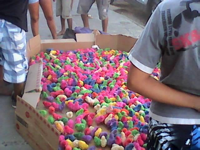 Crime: pintinhos coloridos são vendidos em Ilhéus, BA