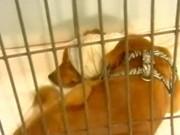 Jovem desiste de assistir jogo do Brasil para salvar cachorro abandonado
