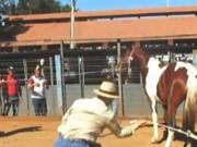 Veja como denunciar maus-tratos a animais