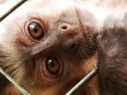 Ibama lança campanha para combater o tráfico de animais silvestres