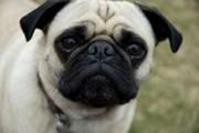 China: festival para comedores de cachorros causa protestos