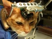 Longe de considerar fim dos testes em animais, Concea regulamenta presença de veterinários em biotérios