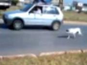 DF: Internauta flagra motorista puxando cão por corda com carro em movimento