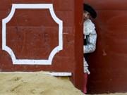 ONG denuncia medidas do governo francês para inibir manifestações anti-touradas