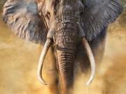 Abate de florestas na Guiné-Bissau está a afastar elefantes das rotas de migração