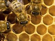Contaminação por pesticidas pode causar impacto ambiental 'sem precedentes'