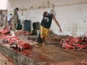 PM apreende caminhão com vacas mortas e doentes em Papagaios, MG