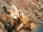 Prefeitura de BH 'lava as mãos' e protetores pedem ajuda para cães