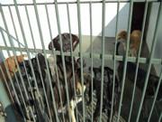 Cães do Canil Municipal aguardam por novos tutores em Juiz de Fora, MG