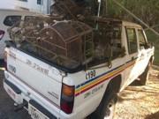 PM resgata 72 aves em Conselheiro Lafaiete, MG