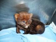Animais silvestres são resgatados e recebem cuidados em Uberaba, MG