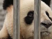 Reprovação aos zoológicos