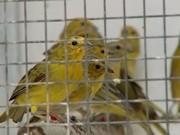 Cresce o número de apreensões de animais silvestres em Uberlândia, MG