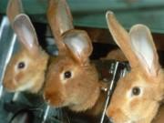 Lei proíbe uso de animais para teste de produtos cosméticos em MS