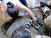 Onça-pintada é resgatada depois de ficar presa em árvore para fugir da cheia no Pantanal