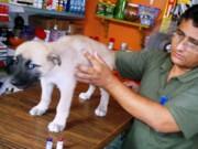 Dona de pet shop será denunciada à Polícia por 'maus tratos' a animais em MT