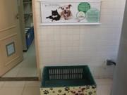 ONG de PE que recolhe animais das ruas utiliza caixas para incentivar doações