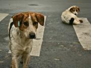 Ativistas denunciam ação de retirada de cães das ruas em Recife, PE