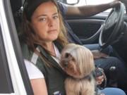 Cachorro preso em carro mobiliza secretaria e polícia em Petrópolis, RJ