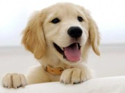 Coordenadoria de Proteção Animal realizará campanha para chipagem de animais em Ijuí, RS