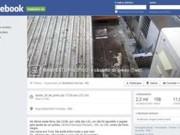 RS: internautas fazem ato por maus-tratos e morte de cadela